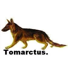 tomartucus